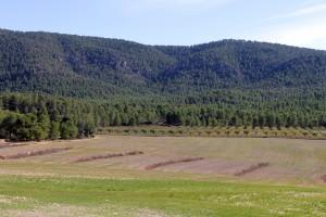 """Finca """"La Hoya de Don Gil"""", un modelo de gestión forestal sostenible, en la región de Murcia."""