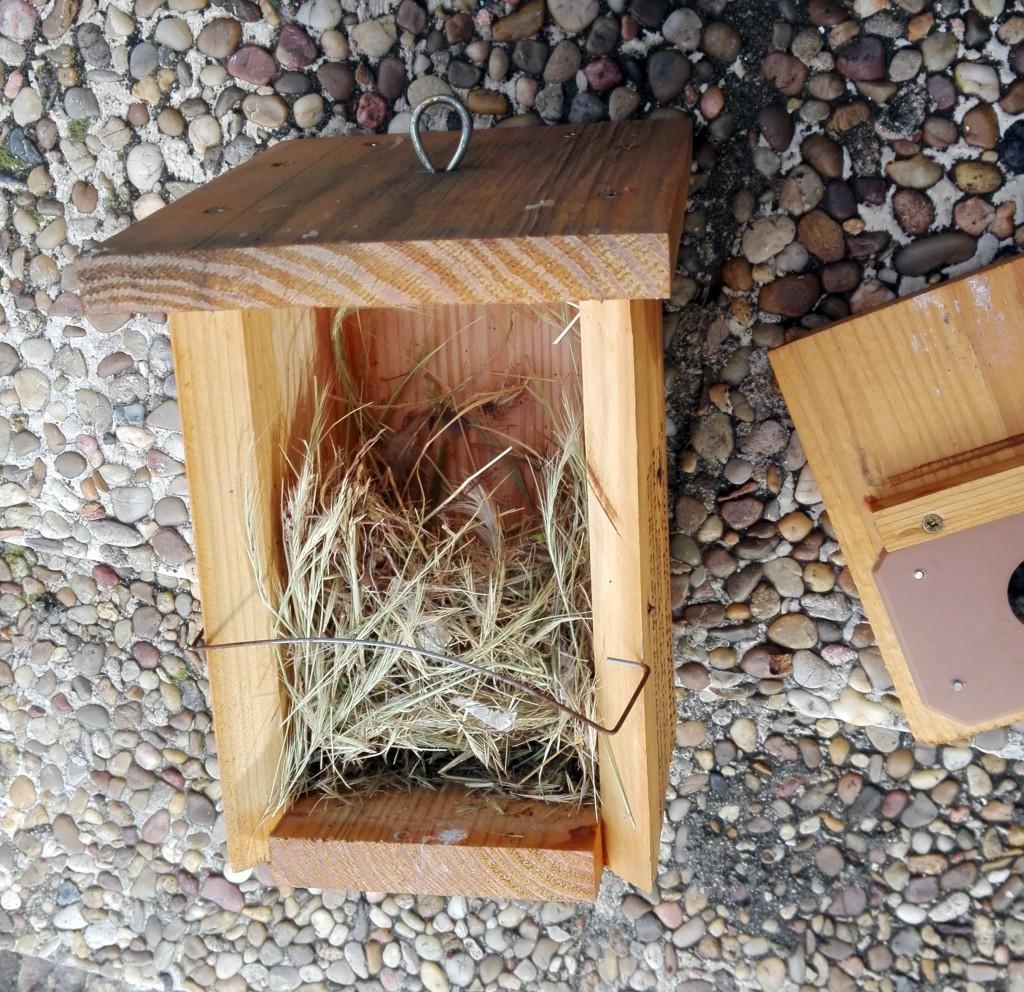 Hay que limpiar la caja-nido de los restos del año pasado para que una nueva pareja de pájaros haga el nido.
